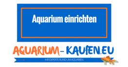 aquarium-einrichten-anleitung