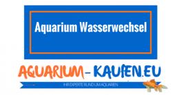 aquarium-wasserwechsel