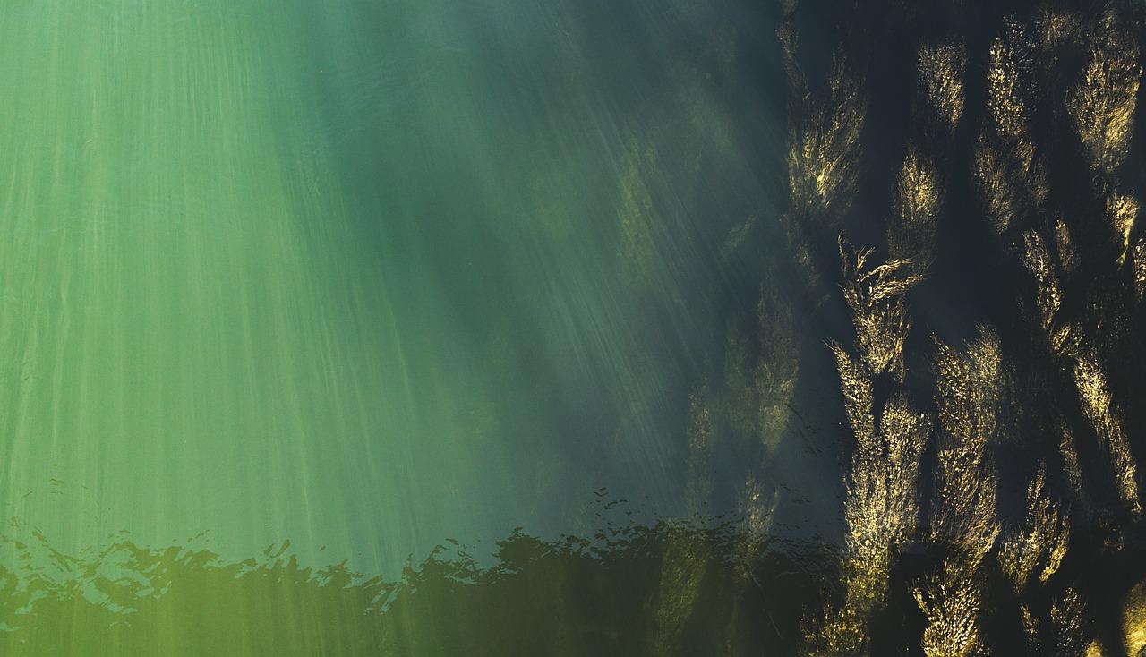Algen im aquarium ursache und bek mpfung was hilft for Teichfische die algen fressen