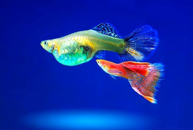 Aquarium kaufen tipps